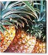 Pineapples Anyone Canvas Print