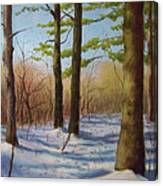 Pines In Winter Canvas Print