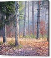 Pinewoods Canvas Print