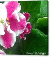Pink African Violets And Leaves Canvas Print