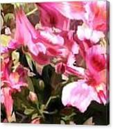Pink Alstroemeria  Canvas Print