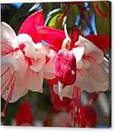 Pink And Red Fuchsia Canvas Print