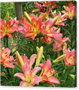 Pink And Yellow Daylilies Canvas Print