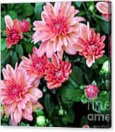 Pink Autumn Mums Canvas Print
