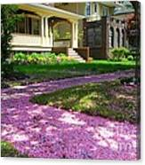 Pink Carpet Canvas Print