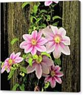 Pink Climatis Flower Canvas Print