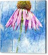 Pink Coneflower On Blue Canvas Print