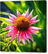 Pink Coneflower Canvas Print