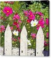 Pink Cosmos Flowers And White Picket Fence Canvas Print