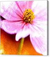 Pink Cosmos On Orange Canvas Print