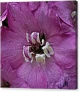 Pink Delphinium Canvas Print