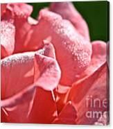Pink Diamond Dust Canvas Print