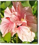 Pink Double Hibiscus Canvas Print