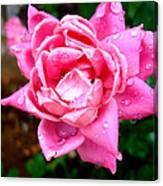 Pink Double Knockout Rose Canvas Print