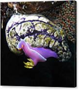 Pink Durid Nudibranch Canvas Print