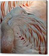 Pink Flamingo 7 Canvas Print