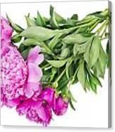 Pink Floral Summer Canvas Print