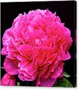 Pink Flower After Rain Canvas Print