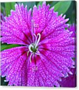 Pink Flower Miss You Canvas Print