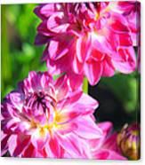 Pink Flower Pair Canvas Print