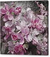 Pink Flowering Crabapple And Grunge Canvas Print