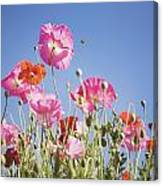 Pink Flowers Against Blue Sky Canvas Print