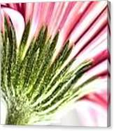 Pink Gerbera 9 Canvas Print
