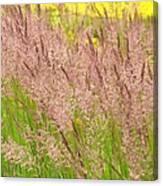 Pink Grass Canvas Print