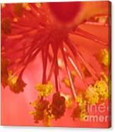Pink Hibiscus Flower Canvas Print