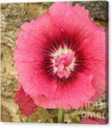 Pink Hollyhock 1 Canvas Print