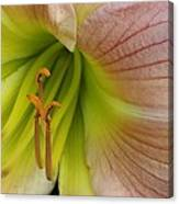 Pink Lily Up Close Canvas Print