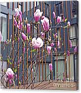 Pink Magnolia. Square Format Canvas Print