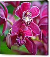 Pink Orchids Canvas Print