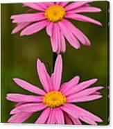 Pink Pair Canvas Print
