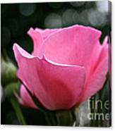Pink Pearl Canvas Print