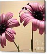 Pink Peas In A Pod Canvas Print