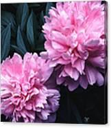Pink Peony Pair Canvas Print