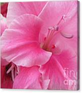 Pink Perfusion Canvas Print