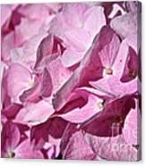 Pink Petal Pushing Canvas Print