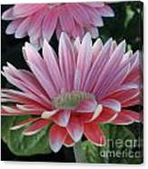 Pink Petals Canvas Print