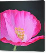Pink Poppy 3 Canvas Print