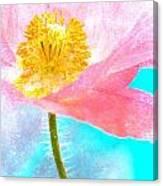 Pink Poppy On Blue Canvas Print