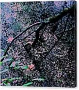Pink River Canvas Print