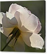 Pink Rose Flower Canvas Print