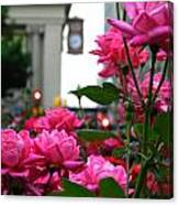 Pink Roses In The City Canvas Print