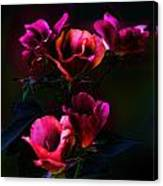Pink Roses Of The Night Canvas Print