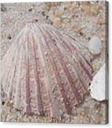 Pink Scallop Shell Canvas Print