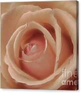 Pink Sensual Rose Canvas Print