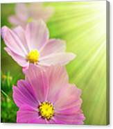 Pink Spring Canvas Print