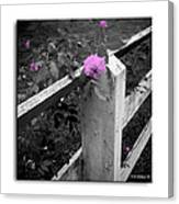 Pink Touch Canvas Print